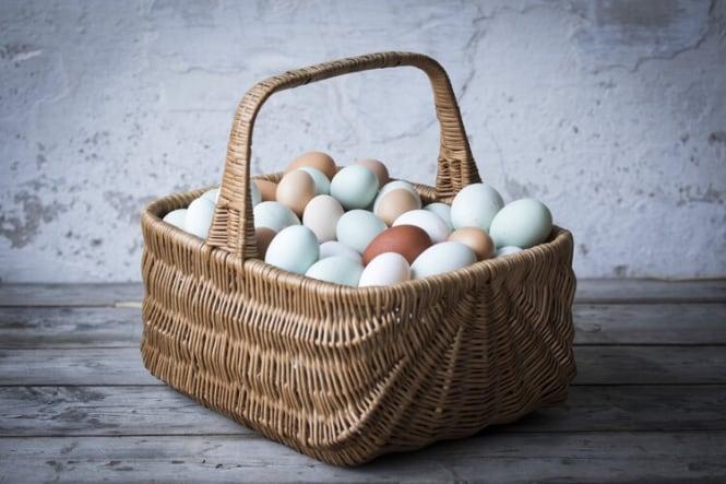 Hønnike æg fra Hegnsholt